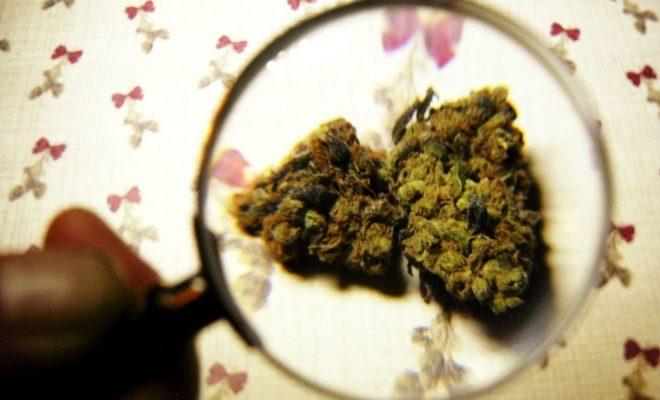 marijuana recall